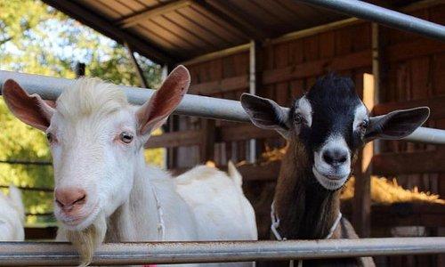 Noble Springs Dairy Farm