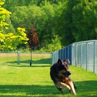 Let your four-legged friend run free at the Leash-Free Dog Park!