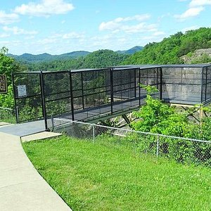 the overlook cage