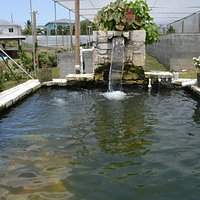 One of the tilapia pools.