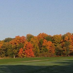 Fall at Gen Cedars