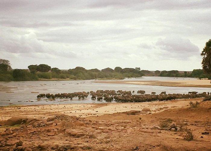 madria di bufali