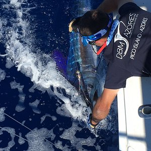 Big Game Fishing, Marlin.