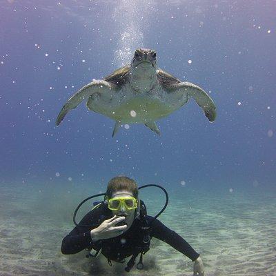 Turtles diving Tenerife
