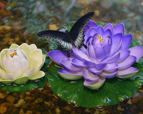 Бабочка на лотосе