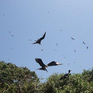 Aves de varias especies.