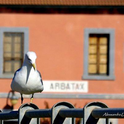 Stazione Treno - Arbatax (OG) Sardegna