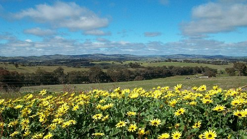 Spring has sprung on the Hill in Heathcote