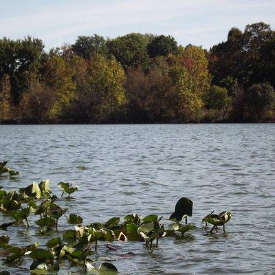 Springfield Lake (southeast area)