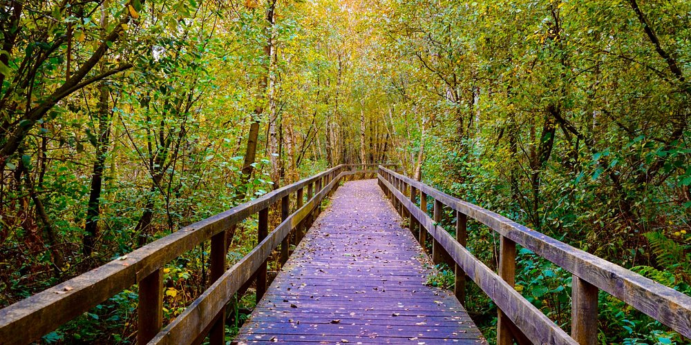 Boardwalk through the woods.