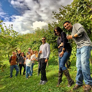 USA winelovers on a winetour at #CartizzePdc exploring the old vines after winetasting.