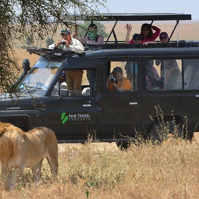 Wildlife experiences in Tanzanian national parks