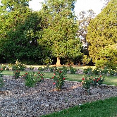 Parte destinada ao jardim. Grande número de rosas belíssimas e fontes de água.