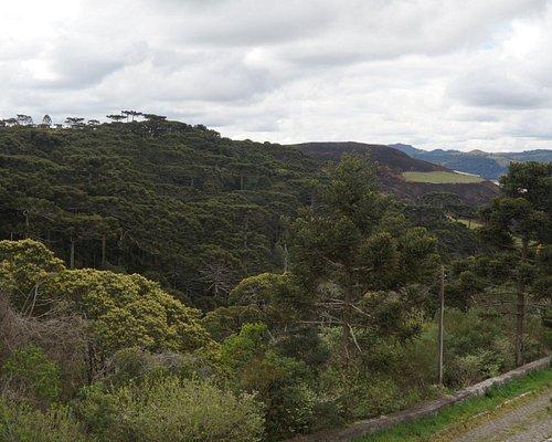 Vista do mirante dos pinheiros