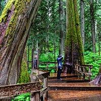 Giant Cedars Trail