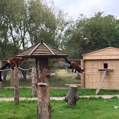 Lovely lemurs