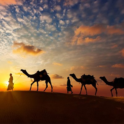 We organise Desert Camel Safari in Pushkar