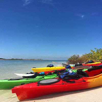 Sunny Day in the Shell Key Preserve!