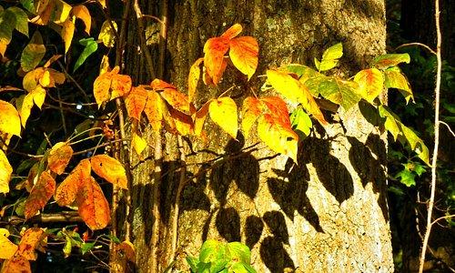 Fall colors at Blacklick Woods