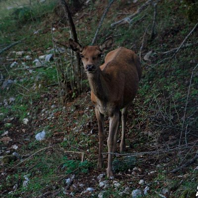 Scattata a pochi metri dal maestoso animale, con il gruppo GreenInk