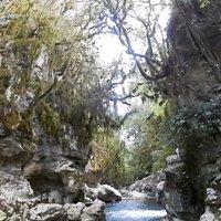 Bosco dei muschi e dei licheni.