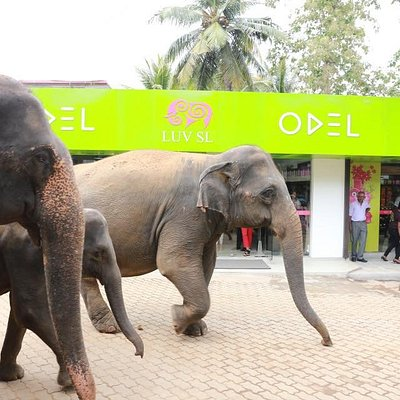 Elephants frequent the promenade twice a day!