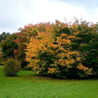 Осень в Таллинском ботаническом саду