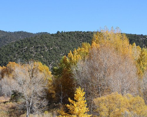View of the wilderness behind the hiking area.