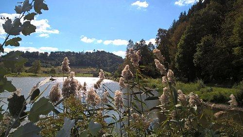 Waldsee - Sehr schön zum Baden geeignet