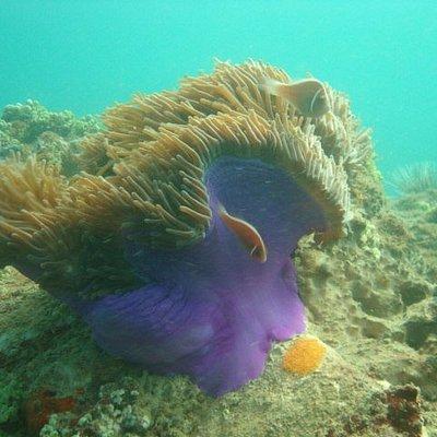 Marine Life at MPai Bay, Koh Rong Samleon Dive Sites