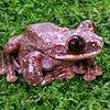 FrogBandit