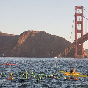 Swimmers at the Golden Gate Bridge race