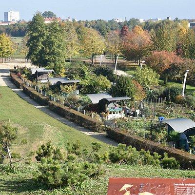 Le parc, en automne.