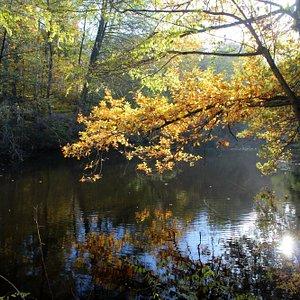 Frankfurter Stadtwald im Herbst