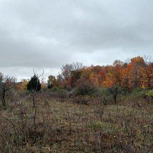 Fall trees.