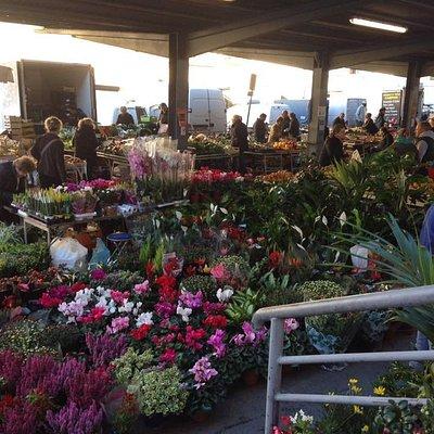 생앰브로지오 시장내 꽃판매시장