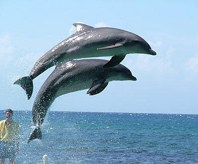 dolphin spotting at goa water world