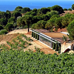 Wine Tourism Center, in the middle of the vineyards and overlloking the Mediterranean!