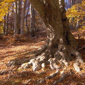 la magie de l'automne dans la montagne de Lure