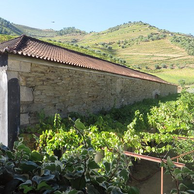 The cellar with vineyards in background.