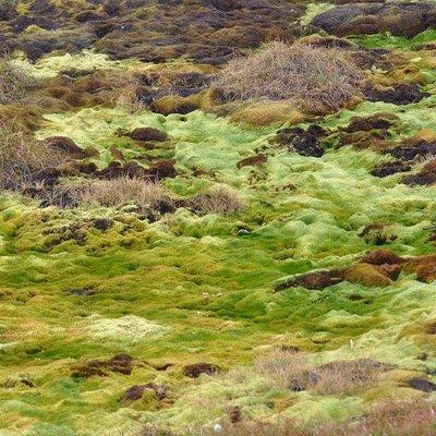 Muschio e permafrost protetto dal passaggio con la passerella