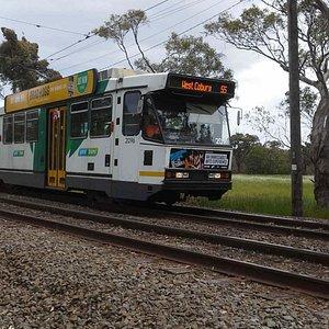 #55 Tram near Zoo