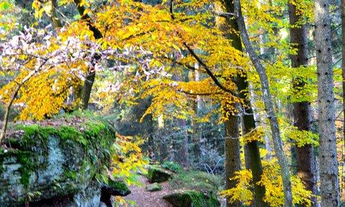 Le mur païen dans les couleurs de l'automne ...