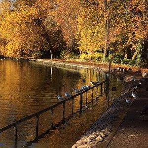 Autumn colours around the lake