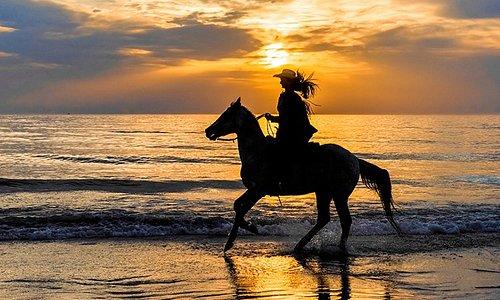 Horses on Vilano Beach at Sunrise