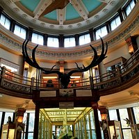 Redpath Museum - antlers