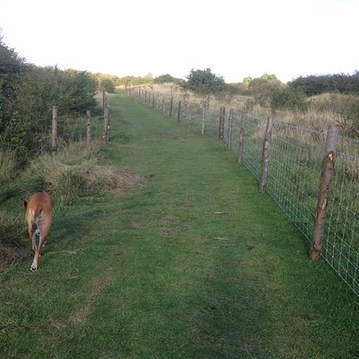 Well fenced in, one bored dog!
