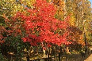 fall trees along the CC Trail