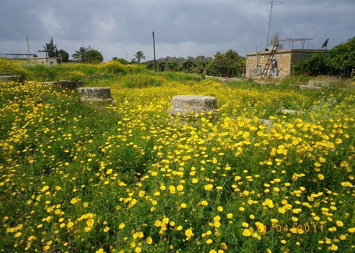 Blommor inuti det antika templets område.