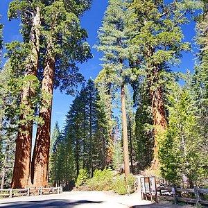 General Grant Tree Trail
